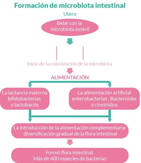 Formacion de la microbiotica instestinal del bebe